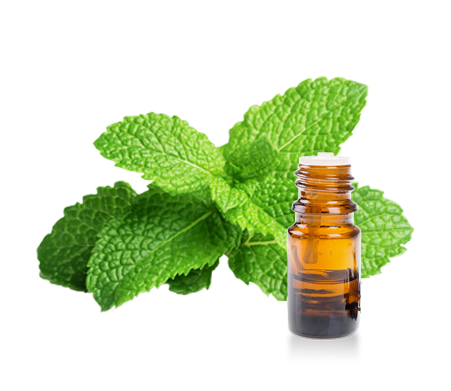 Essential oils of Peppermint